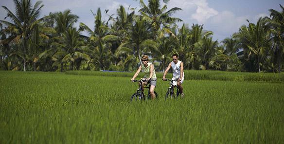 Cycling Tour - Rice Paddy