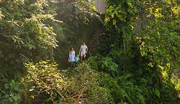 Traverse Maya's Forest Trail
