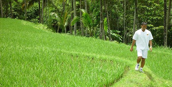 Rice Paddy Walk - Guide